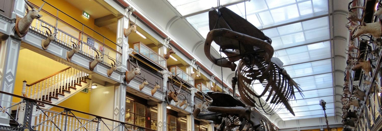 Natural History Museum Dublin Shop